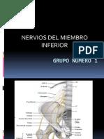 Nervios Del Miembro Inferior. Presentacion