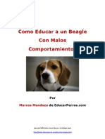 Como Educar a Un Beagle Con Malos Comportamientos