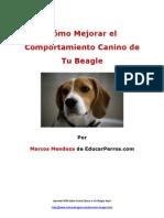 Cómo Mejorar el Comportamiento Canino de tu Beagle