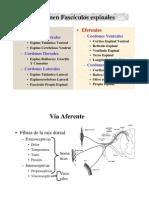 e Medula Espinal 2