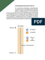 anapolimerizacion