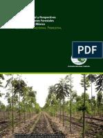 SituacionActual_Perspectivas_PlantacionaesForestalesComercialesMExico