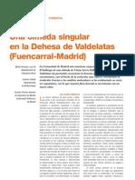 Una Olmeda Singular en La Dehesa de Valdelatas Fuencarral Madrid