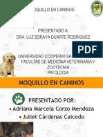 Moquillo Canino Distemper