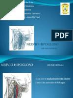NERVIO HIPOGLOSO