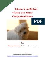 Como Educar a un Bichón Maltés Con Malos Comportamientos