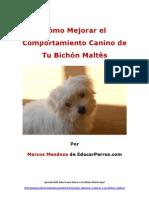 Cómo Mejorar el Comportamiento Canino de tu Bichón Maltés
