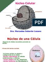 Núcleo Celular (2)