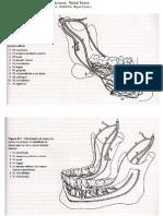 Resumo Nervos Mandibulares e Maxilares