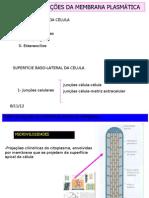 Especializações e Junções de membrana