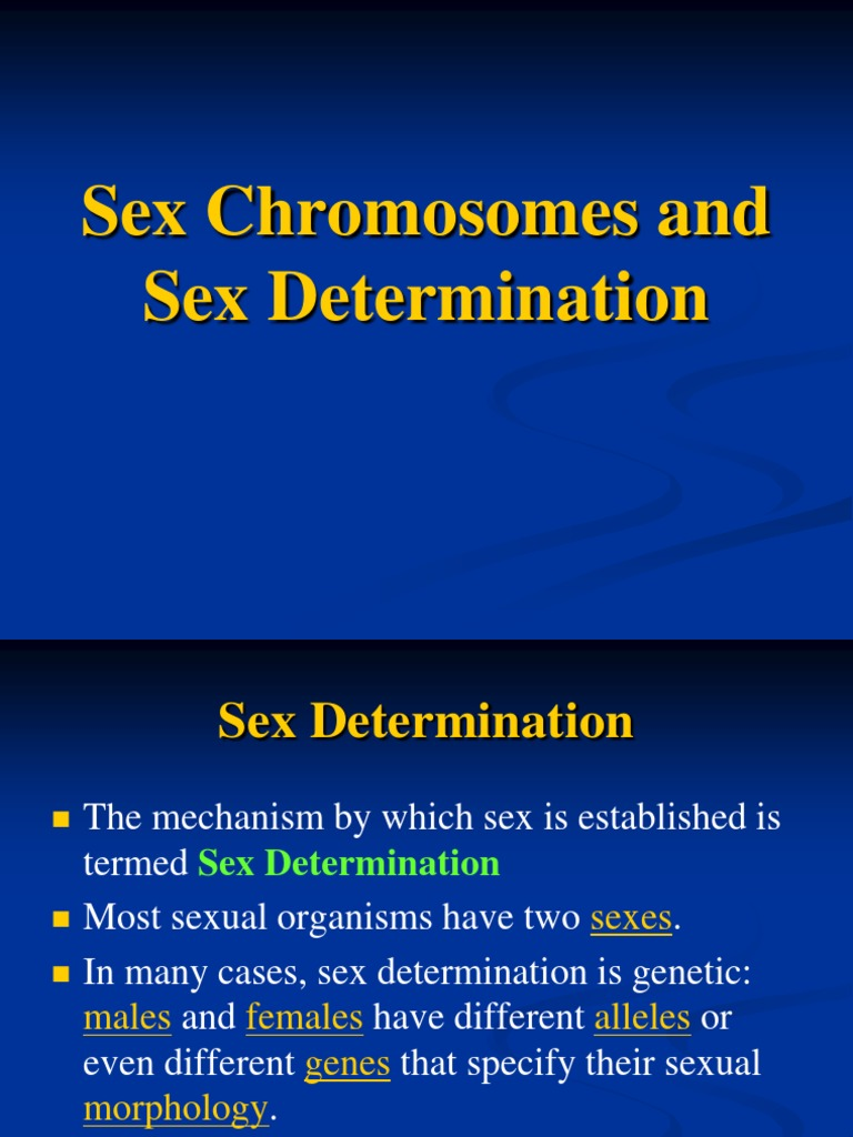 sex determination and sex chromosomes ppt to pdf in Montreal