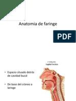 anatomiadefaringe-120319212423-phpapp01