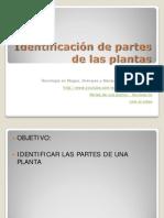 Partes de La Planta (1)