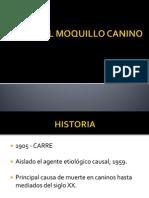 Virus Del Moquillo Canino Final