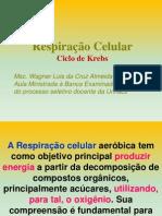Aula ciclo de - Krebs