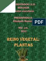 Reino Plantae-Plantas Vasculares