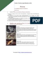 Perros PDF EspecialidaDesarrollada (1)