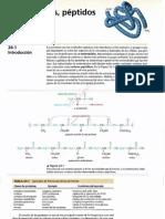 2cap 24 Aminoacidos, Peptidos y Proteinas