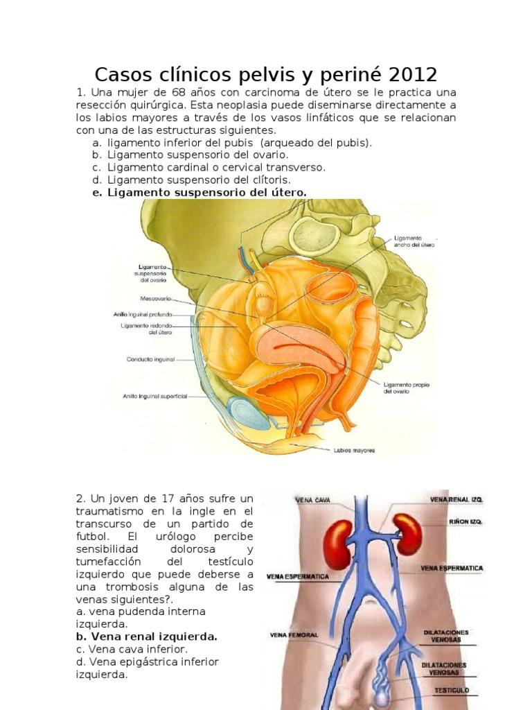 Perfecto La Pelvis Y La Anatomía Del Perineo Viñeta - Imágenes de ...