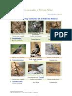 Pájaros Comunes en El Valle de México