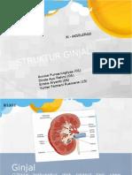 Struktur Ginjal