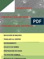 producción de semen e inseminación