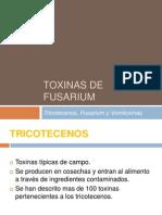 Gran Fusarium