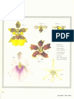 Orchidaceae Brasilienses - Pabst Vol 2 Part22