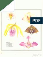 Orchidaceae Brasilienses - Pabst Vol 2 Part19