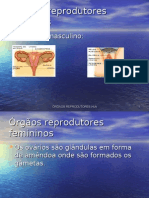 rg os reprodutores humanos