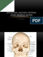 Anatomie Gehirn