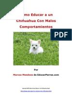 Como Educar a Un Chihuahua Con Malos Comportamientos