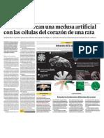 Medusa artificial con corazon de rata