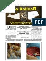 La+Ballena