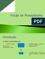 Fusão de Proto