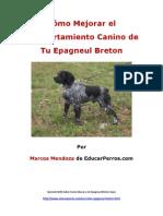 Cýýmo Mejorar el Comportamiento Canino de tu Epagneul Breton