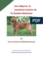 Cómo Mejorar el Comportamiento Canino de tu Golden Retriever