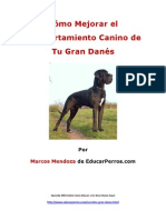 Cómo Mejorar el Comportamiento Canino de tu Gran Danés