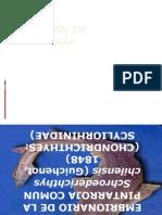 Desarrollo Embrionario de La Pintaroja
