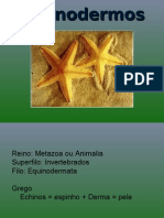 Equinodermos Caracteristicas