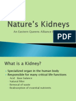 Nature's Kidneys