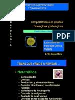 Cinetica_leucocitaria
