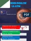 Embriologia de Atm