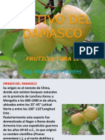 CULTIVO DAMASCO UJM