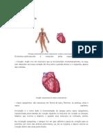 Sistema Circulatório texto e atividade
