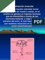 ContracciónMuscular