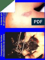 Parasitologia - Aranhas e escorpiões
