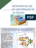 interpretacion de los principios universales de la célula