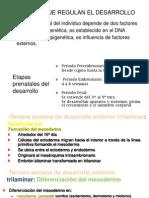 DESARROLLO Cardiovascular
