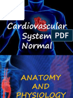 Cardiovascular System - Normal